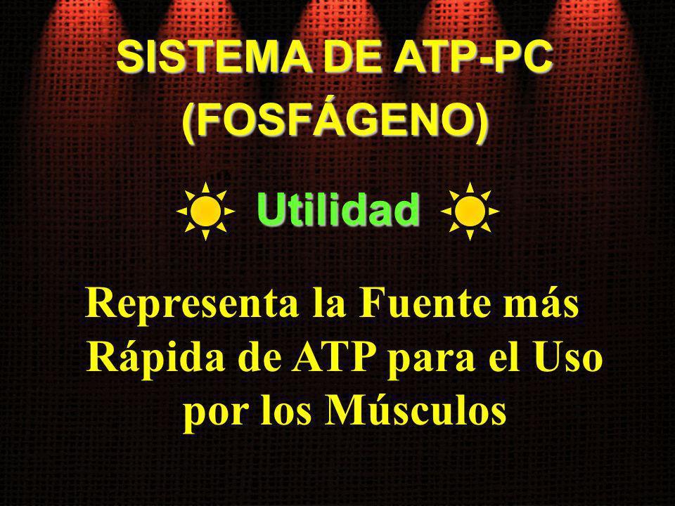 Representa la Fuente más Rápida de ATP para el Uso por los Músculos