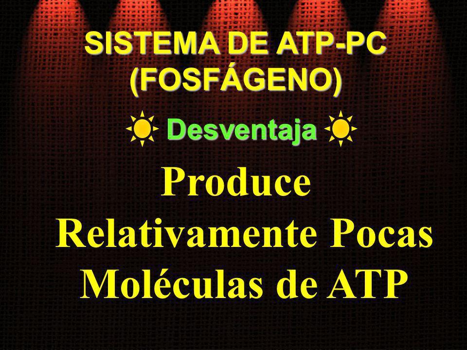 Produce Relativamente Pocas Moléculas de ATP
