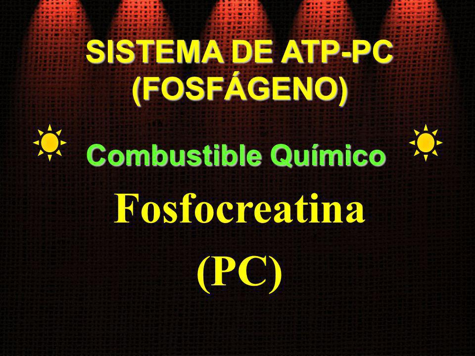 SISTEMA DE ATP-PC (FOSFÁGENO) Combustible Químico Fosfocreatina (PC)