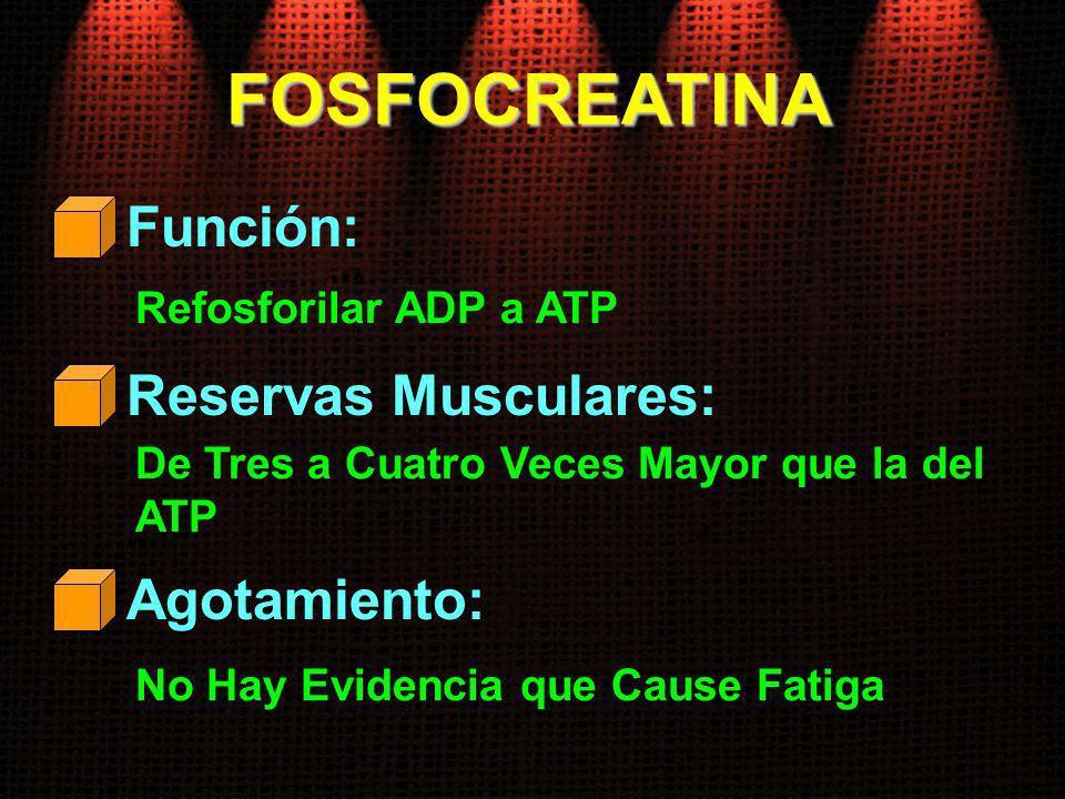 FOSFOCREATINA Función: Reservas Musculares: Agotamiento: