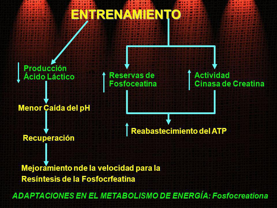 Reabastecimiento del ATP