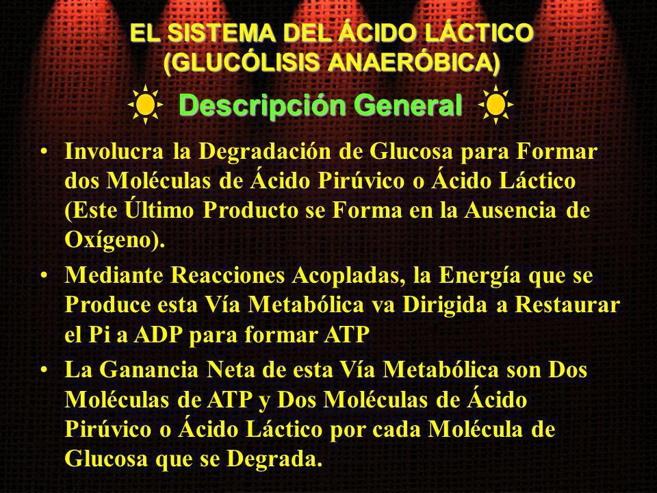 EL SISTEMA DEL ÁCIDO LÁCTICO (GLUCÓLISIS ANAERÓBICA)