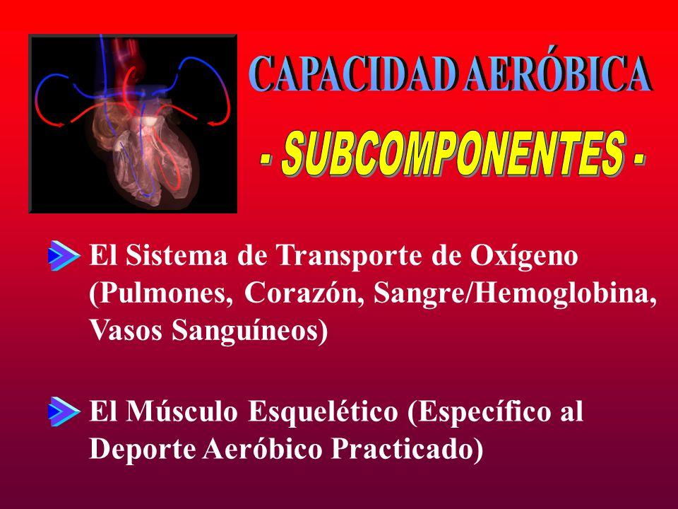 CAPACIDAD AERÓBICA - SUBCOMPONENTES -