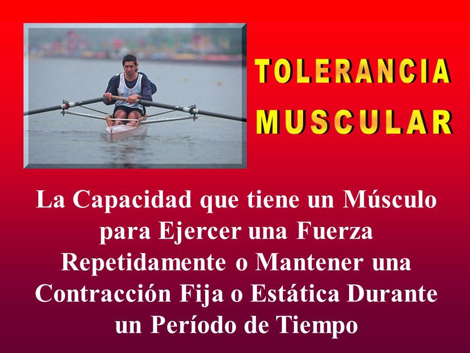 TOLERANCIA MUSCULAR La Capacidad que tiene un Músculo