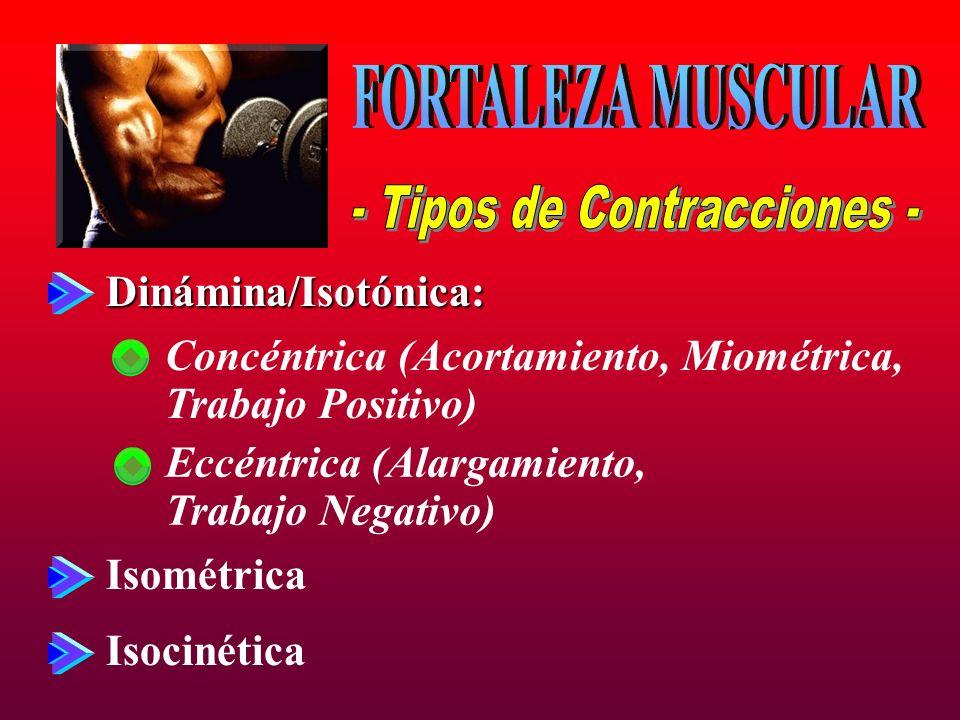- Tipos de Contracciones -