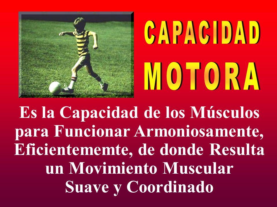 CAPACIDAD MOTORA Es la Capacidad de los Músculos