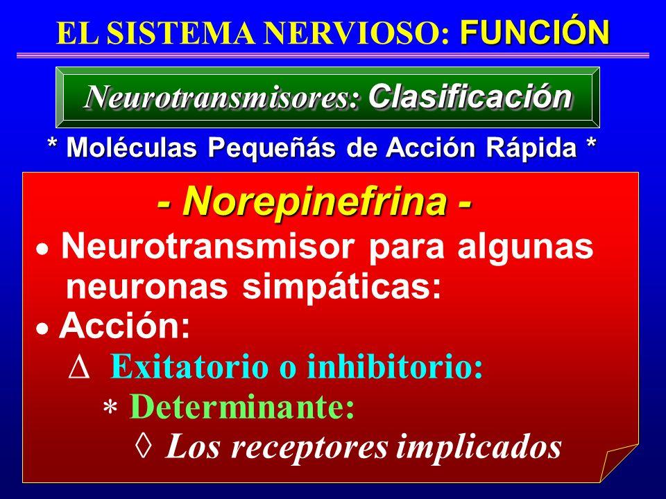 - Norepinefrina - Neurotransmisor para algunas neuronas simpáticas:
