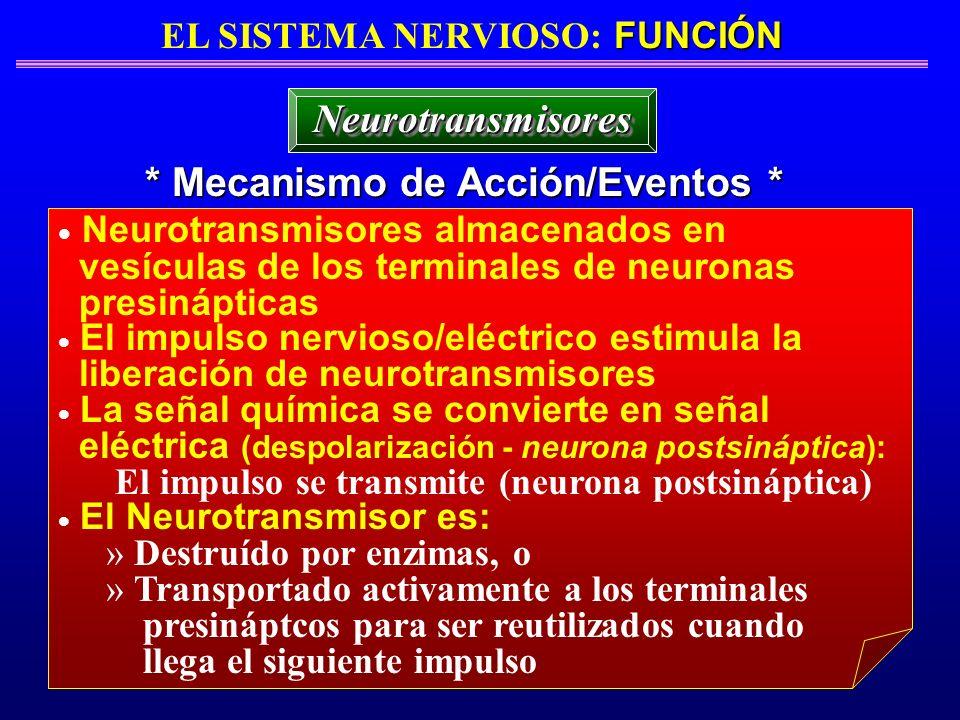 EL SISTEMA NERVIOSO: FUNCIÓN * Mecanismo de Acción/Eventos *