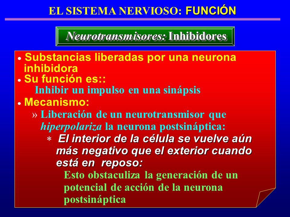 EL SISTEMA NERVIOSO: FUNCIÓN Neurotransmisores: Inhibidores