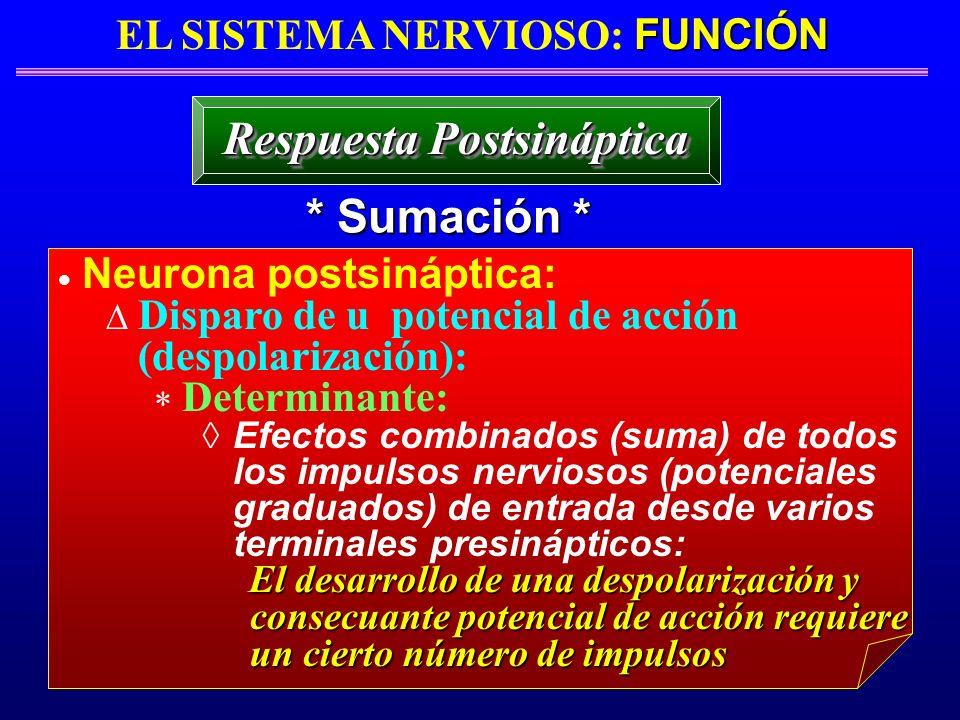 EL SISTEMA NERVIOSO: FUNCIÓN Respuesta Postsináptica