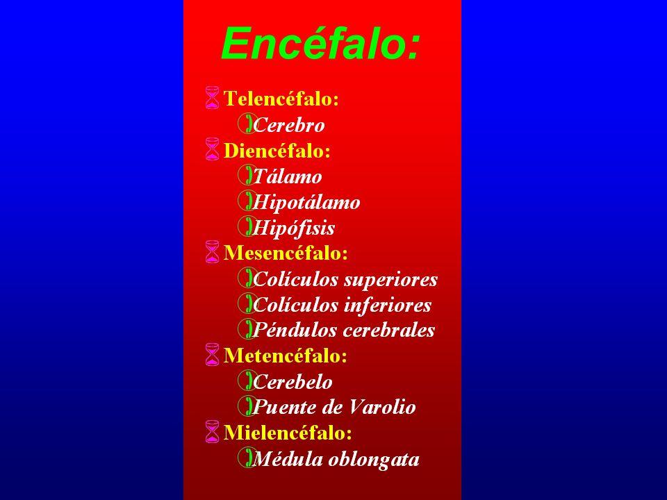Encéfalo: