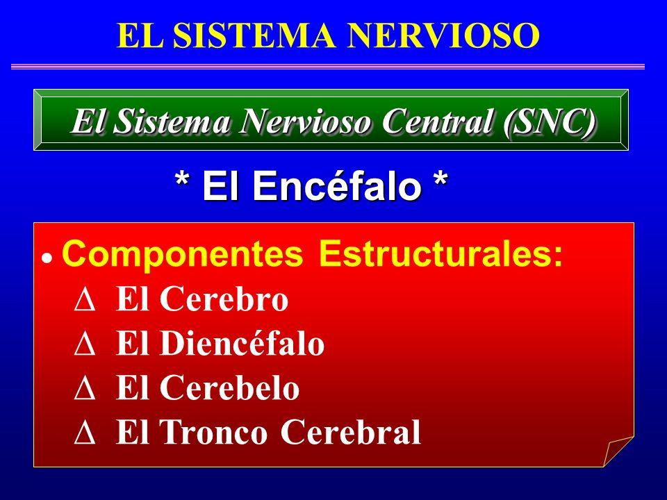 El Sistema Nervioso Central (SNC)