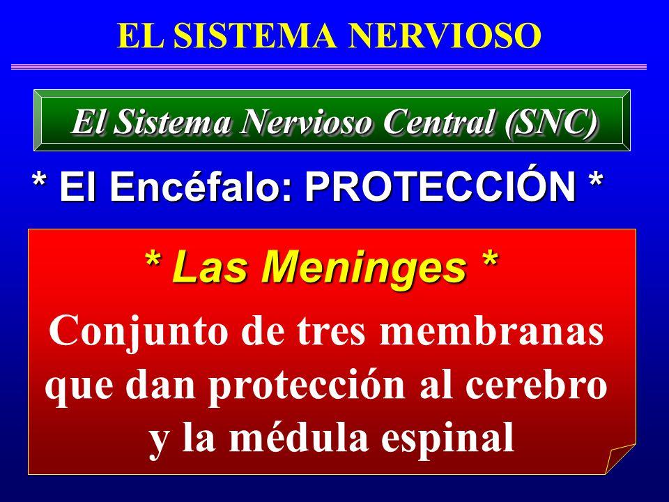 Conjunto de tres membranas que dan protección al cerebro