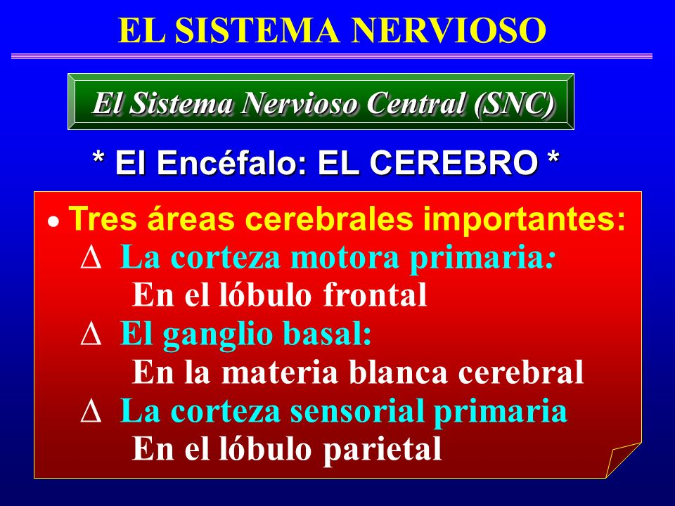 El Sistema Nervioso Central (SNC) * El Encéfalo: EL CEREBRO *