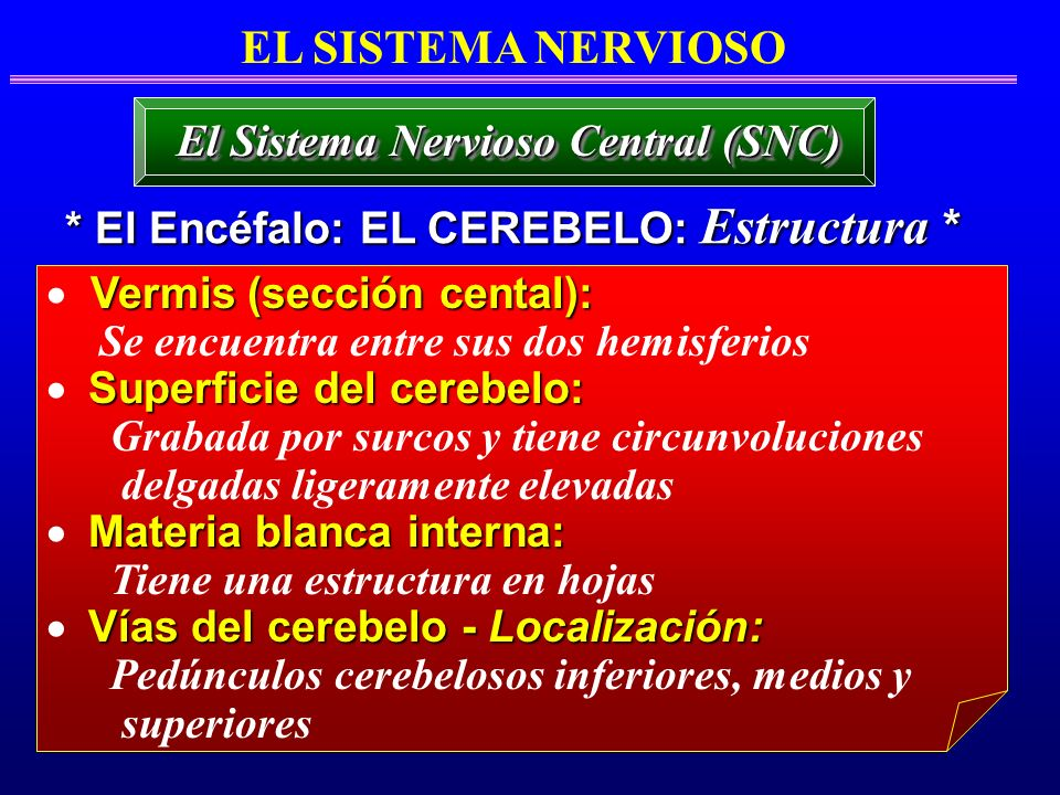 EL SISTEMA NERVIOSO El Sistema Nervioso Central (SNC)