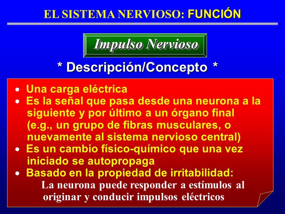 EL SISTEMA NERVIOSO: FUNCIÓN * Descripción/Concepto *
