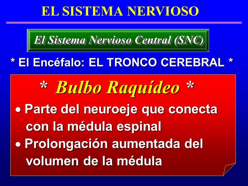 El Sistema Nervioso Central (SNC) * El Encéfalo: EL TRONCO CEREBRAL *