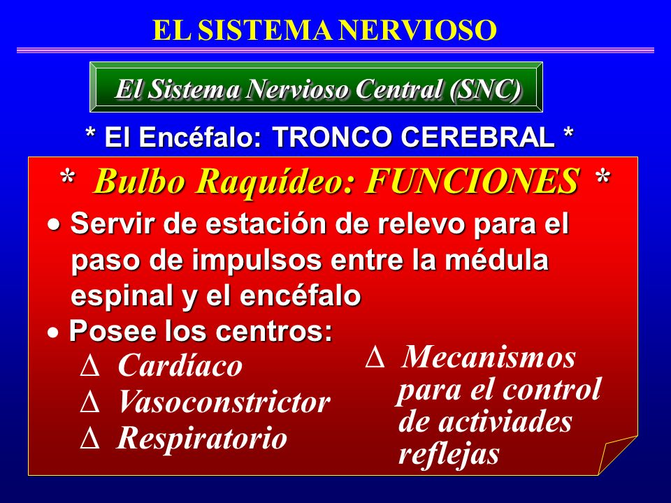 * Bulbo Raquídeo: FUNCIONES *