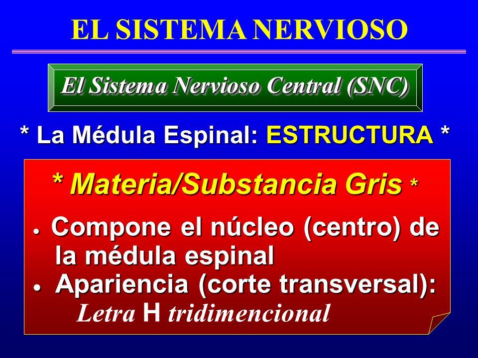 * Materia/Substancia Gris *