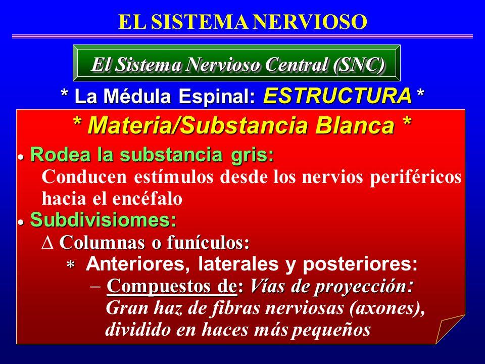 * Materia/Substancia Blanca *