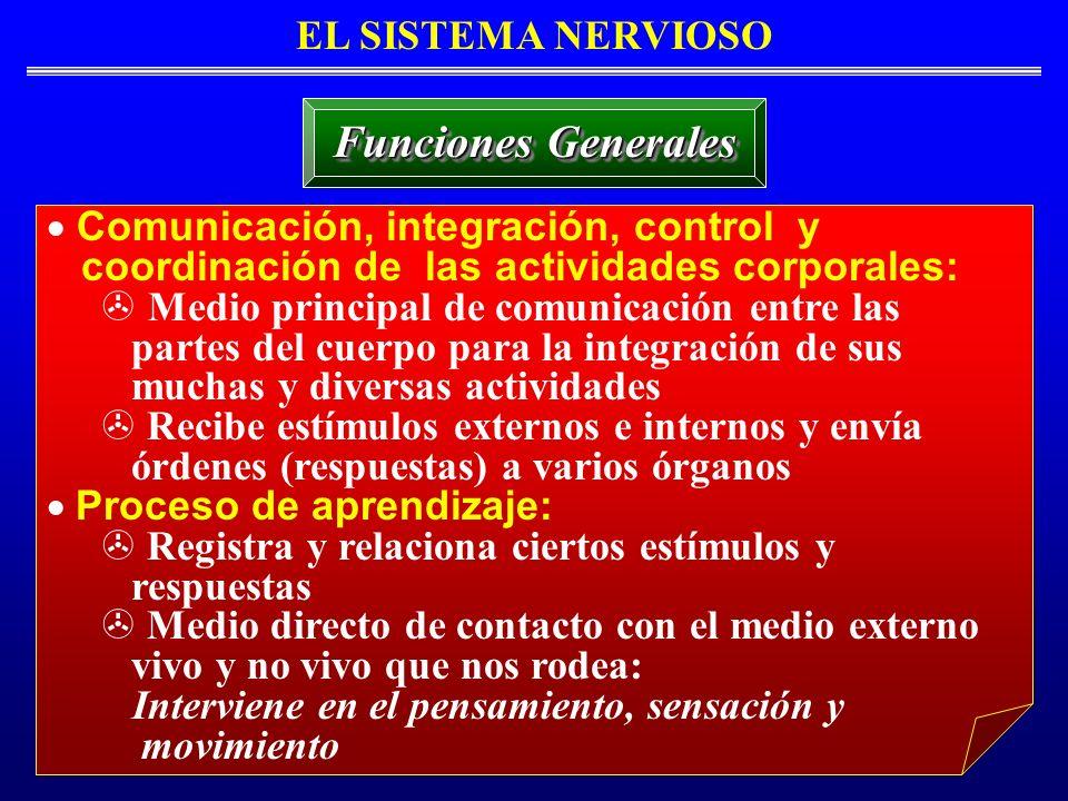 Funciones Generales EL SISTEMA NERVIOSO