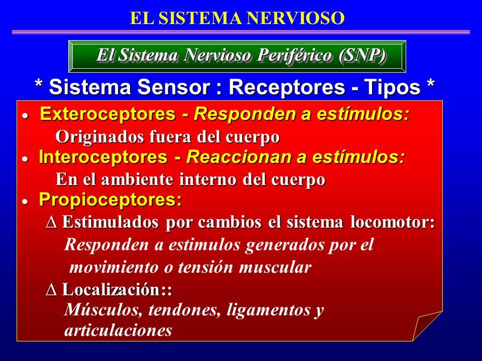 * Sistema Sensor : Receptores - Tipos *