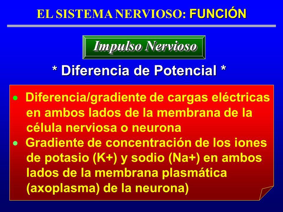 EL SISTEMA NERVIOSO: FUNCIÓN * Diferencia de Potencial *