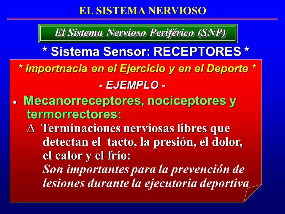 * Sistema Sensor: RECEPTORES *