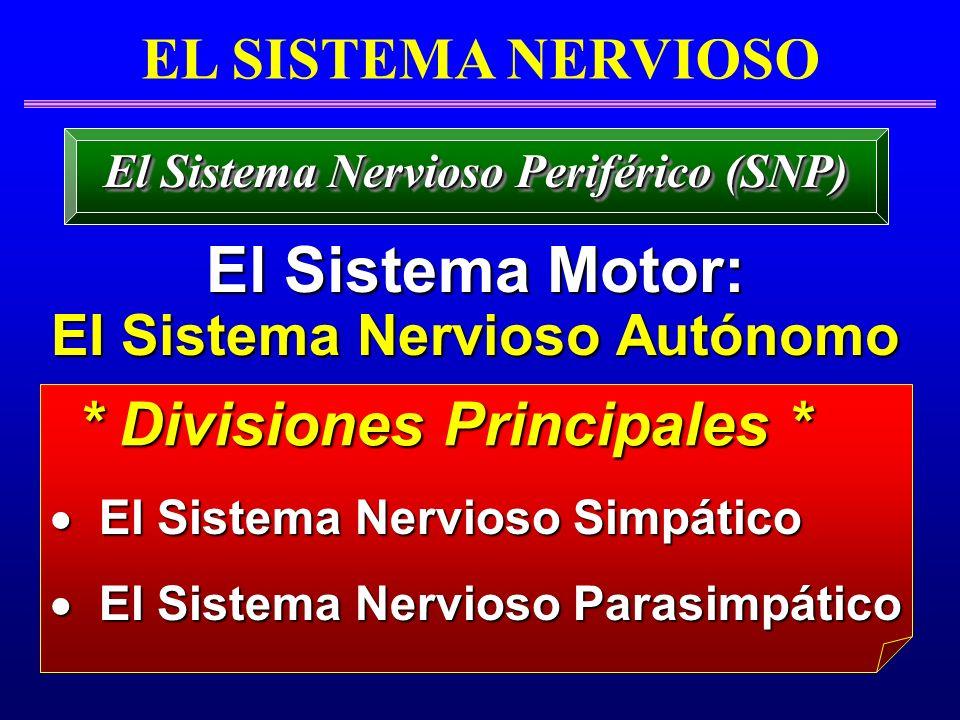 * Divisiones Principales *