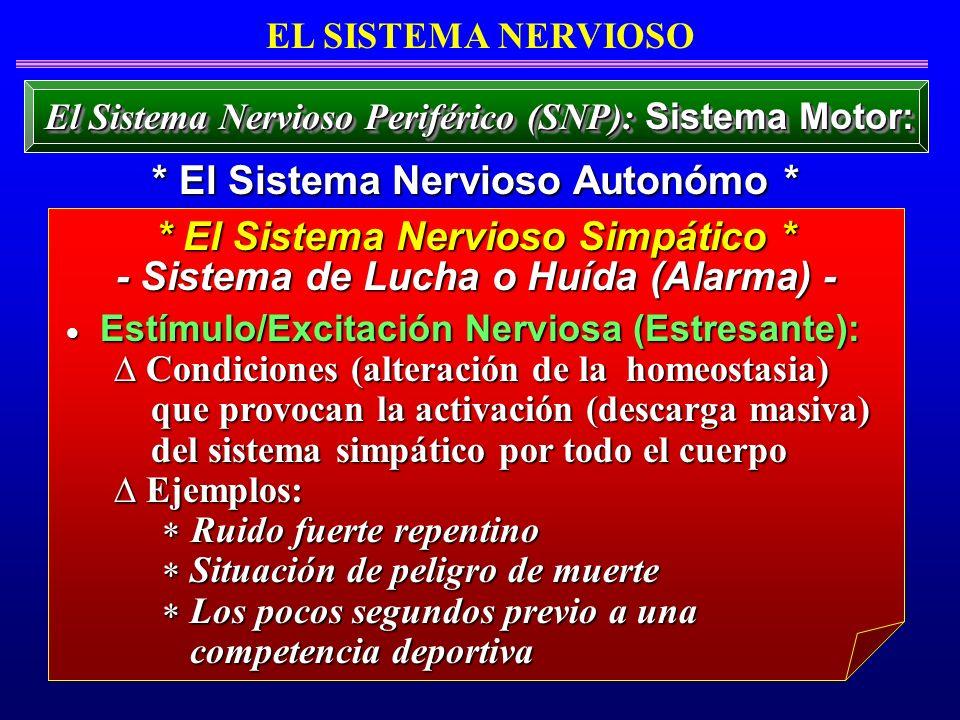 * El Sistema Nervioso Autonómo * * El Sistema Nervioso Simpático *