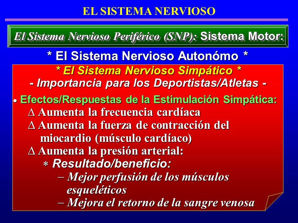 * El Sistema Nervioso Autonómo *