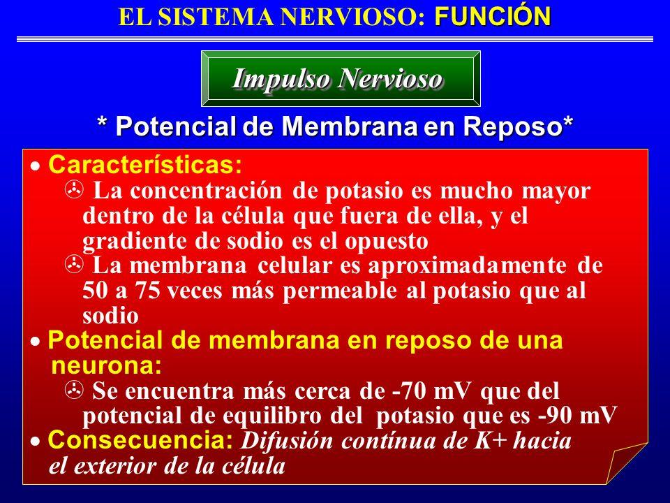 EL SISTEMA NERVIOSO: FUNCIÓN * Potencial de Membrana en Reposo*