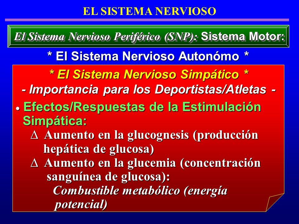 Aumento en la glucognesis (producción hepática de glucosa)