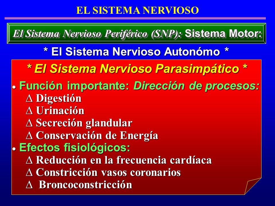 * El Sistema Nervioso Parasimpático *