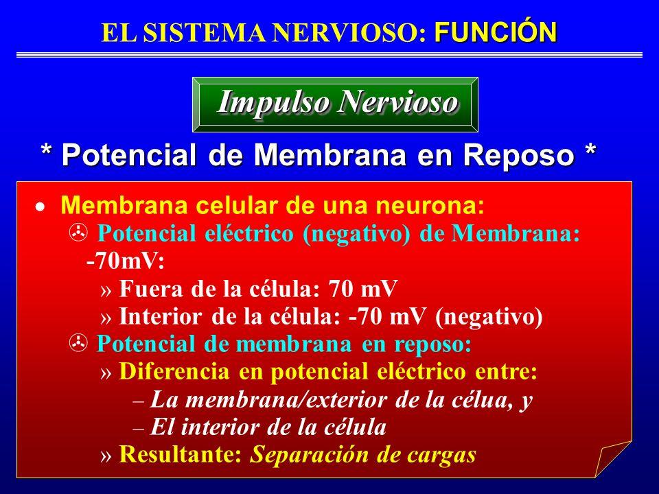 EL SISTEMA NERVIOSO: FUNCIÓN * Potencial de Membrana en Reposo *