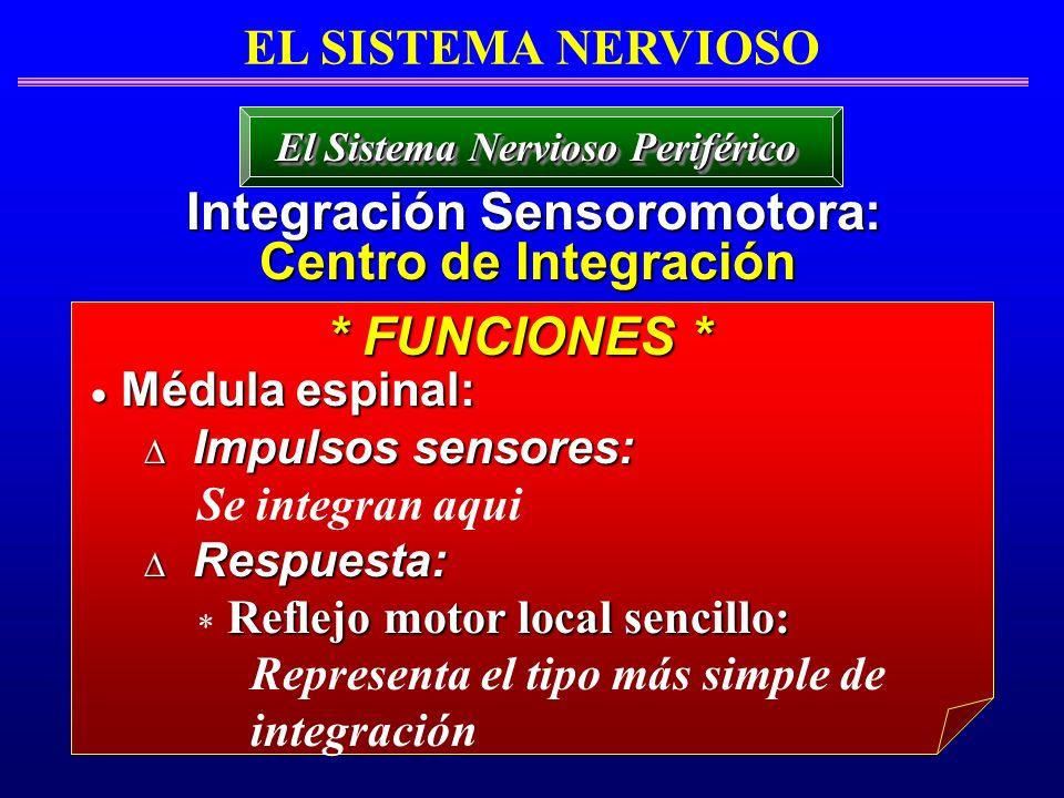 El Sistema Nervioso Periférico Integración Sensoromotora: