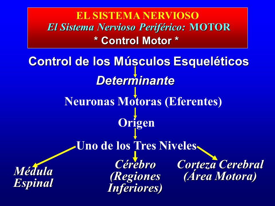 Control de los Músculos Esqueléticos