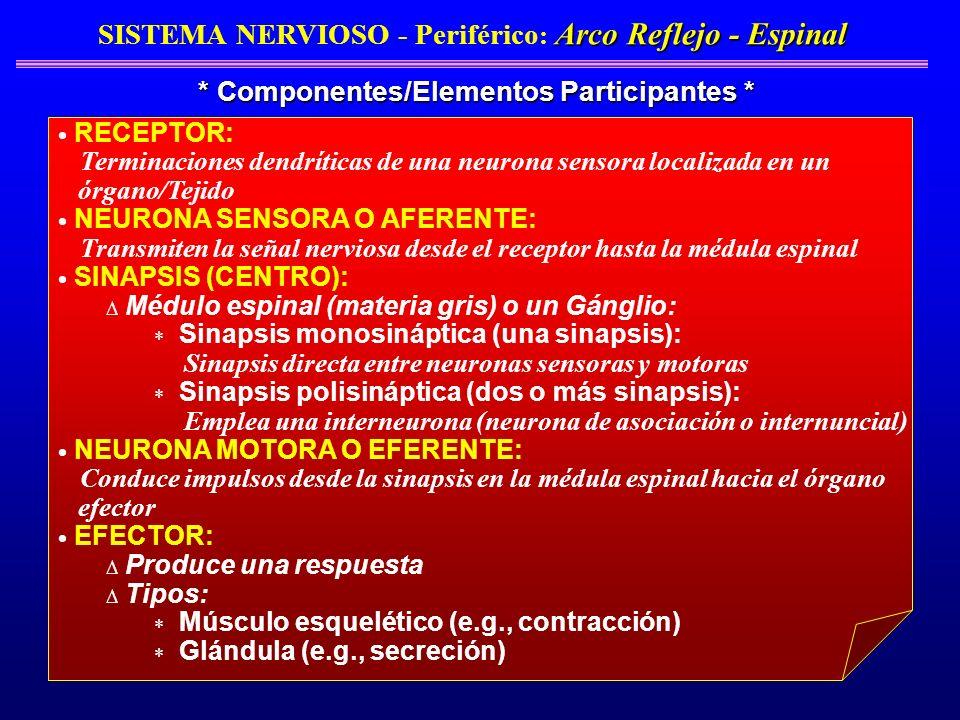 SISTEMA NERVIOSO - Periférico: Arco Reflejo - Espinal