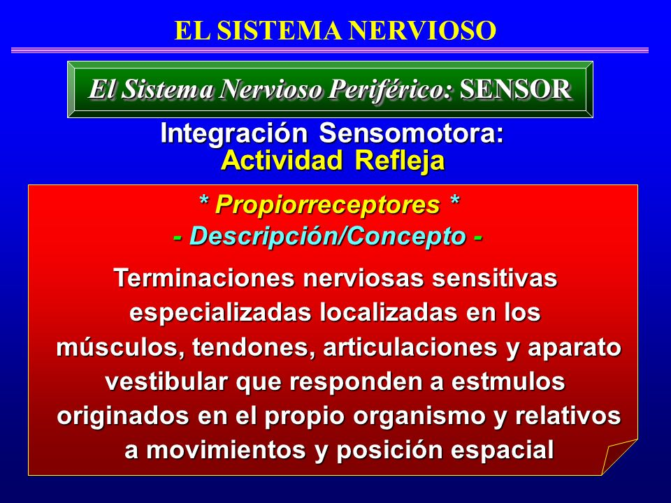 El Sistema Nervioso Periférico: SENSOR