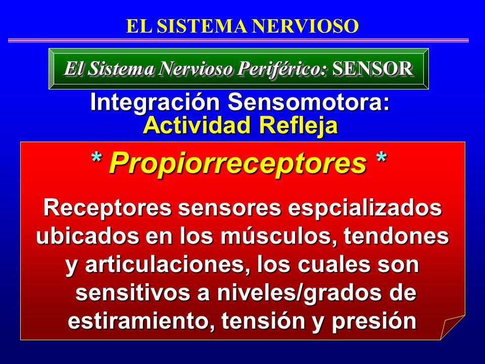 * Propiorreceptores * Integración Sensomotora: Actividad Refleja