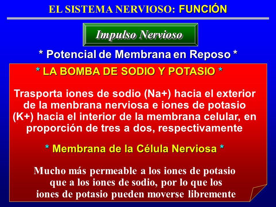Impulso Nervioso * Potencial de Membrana en Reposo *