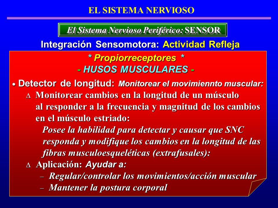Integración Sensomotora: Actividad Refleja * Propiorreceptores *