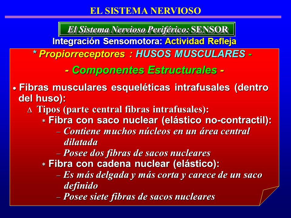 - Componentes Estructurales -