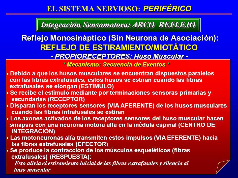Integración Sensomotora: ARCO REFLEJO