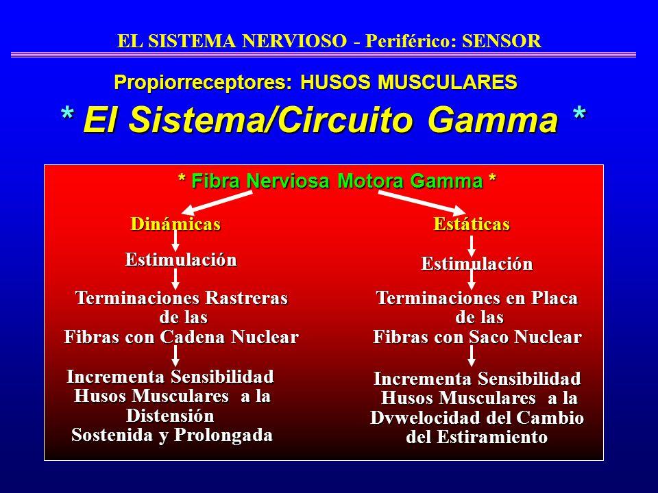 * El Sistema/Circuito Gamma *