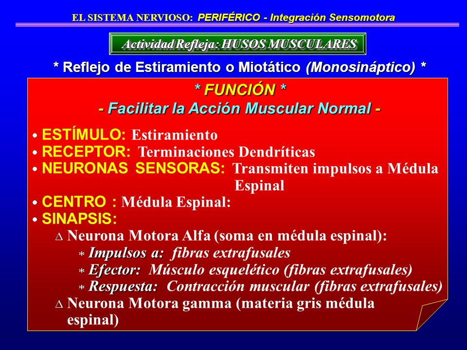 * FUNCIÓN * - Facilitar la Acción Muscular Normal -