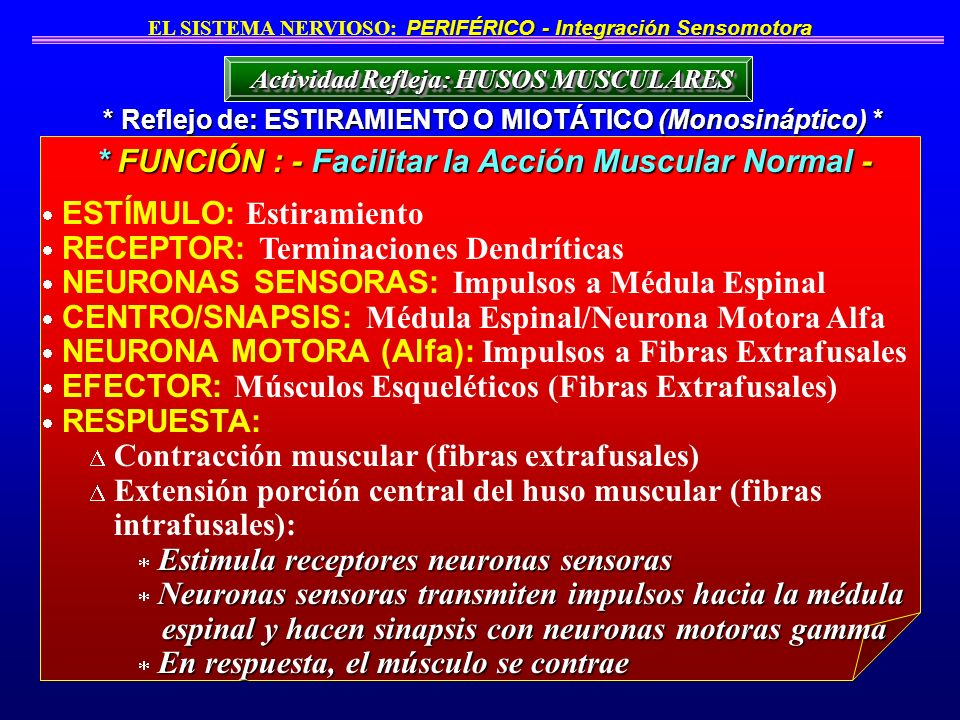 * FUNCIÓN : - Facilitar la Acción Muscular Normal -