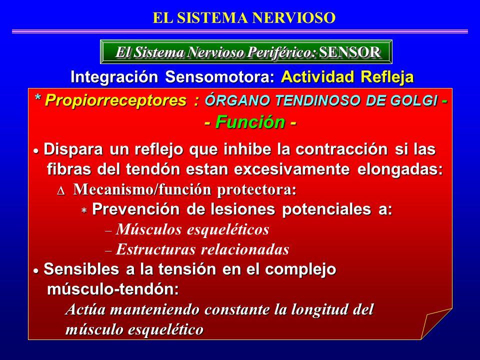 - Función - Integración Sensomotora: Actividad Refleja