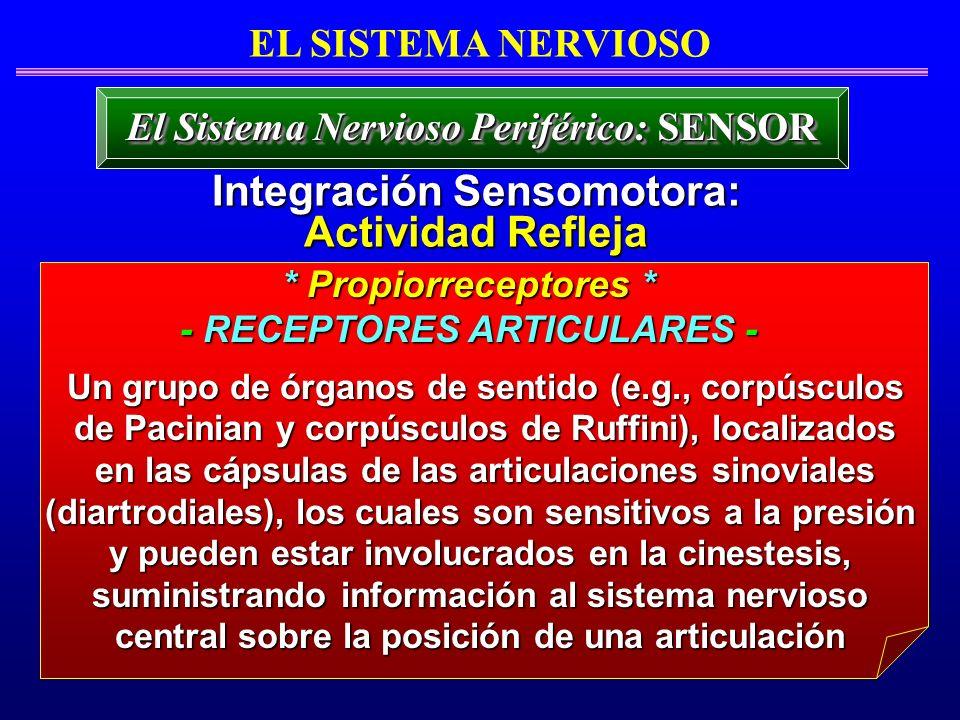 Integración Sensomotora: Actividad Refleja