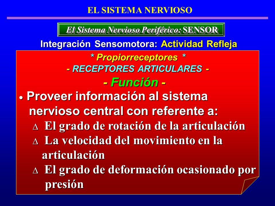 Proveer información al sistema nervioso central con referente a: